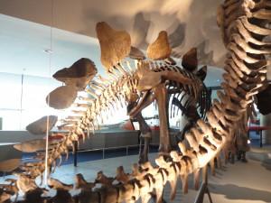 Naturalis Dino skelet