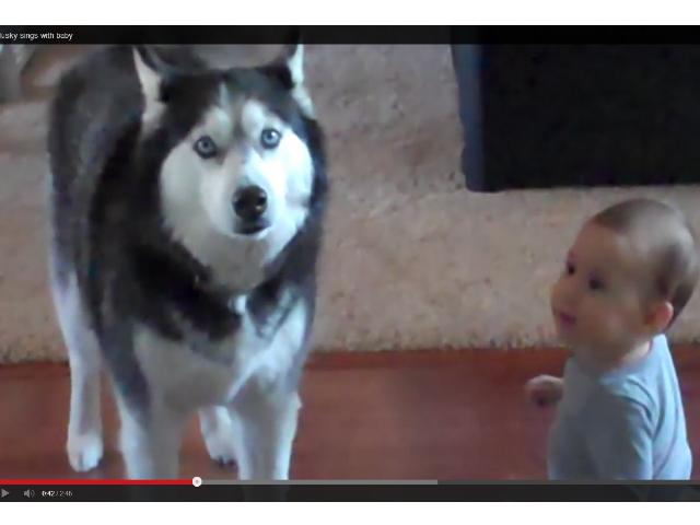 Husky praat met baby