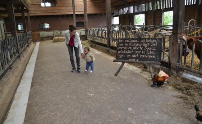 de stal van boerderij 't Geertje