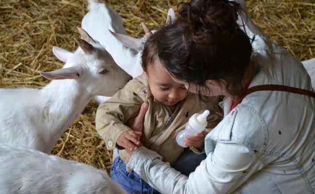 Boerderij 't Geertje lammetjes geiten melk geven