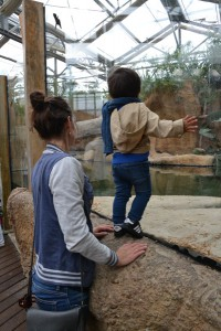 krokodillen kijken in Blijdorp dierentuin