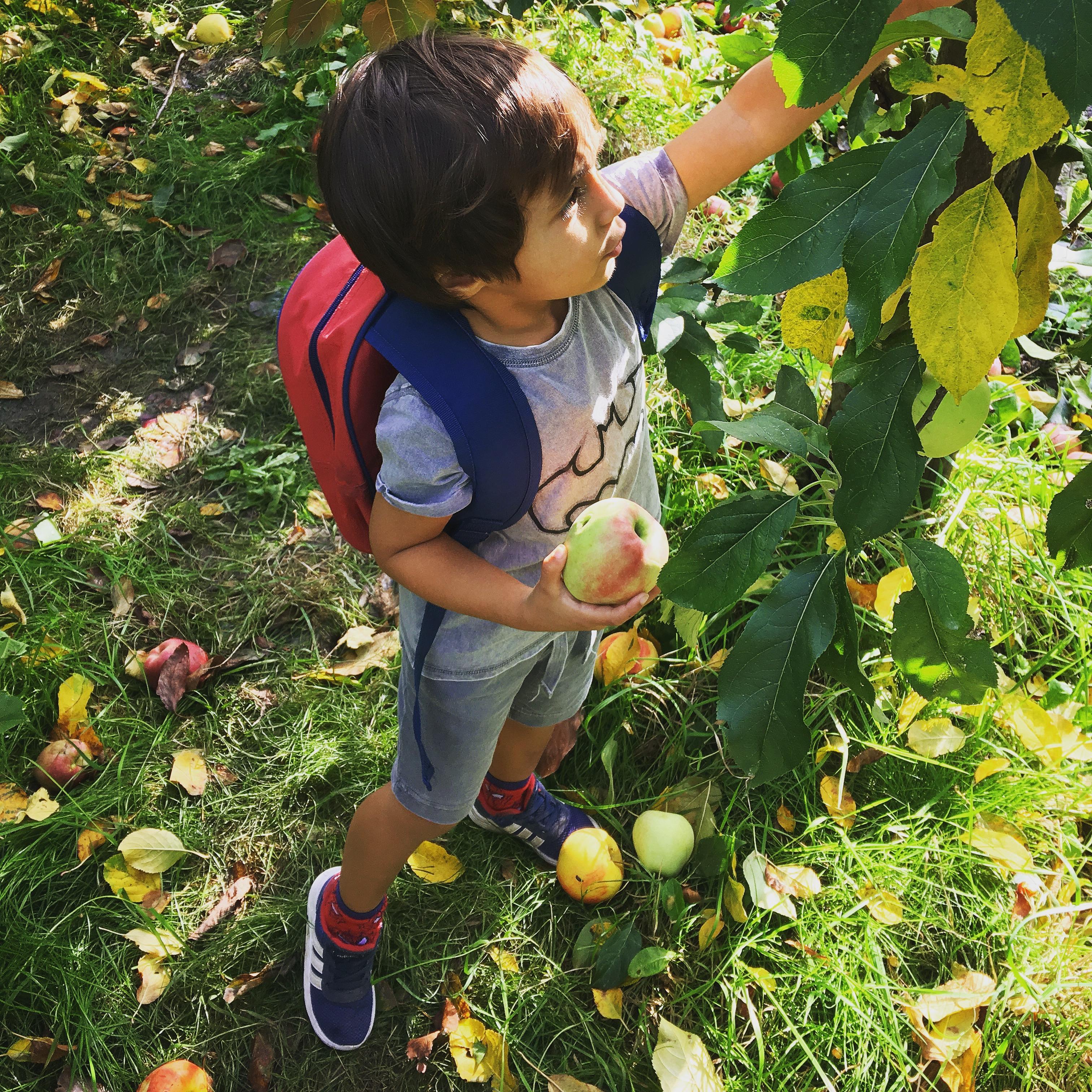 Olmhoeve landgoed appels peren zelf plukken