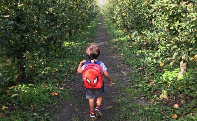 Appels plukken olmhoeve
