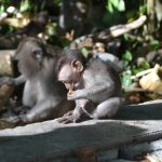 apenbos monkeyforest ubud