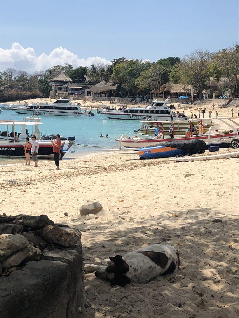 Nusa Lembongan tips Mushroom Bay uitzicht mola mola coffee